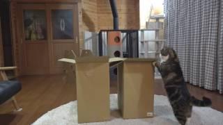 二つの大きな箱とねこ。-Two large boxes and Maru&Hana.-