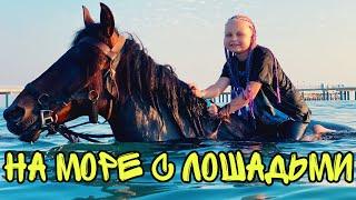 ВЛОГ Купаемся с лошадьми в море АКТИВНЫИ ВЕЧЕР на отдыхе Батя Ле ша реальная жизнь