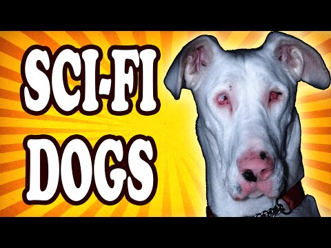 Top 10 Famous Dogs Straight Out of Science Fiction — TopTenzNet