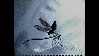 Drawing a Dragonfly