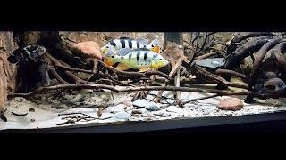 Аквариумы которые произвели на меня впечатления №8(Палюдариумы,20 тонн,лучший аквариум с цихлами)