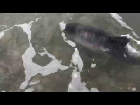 Adorable Video My Dog Saved Baby Dolphin ... Man Says