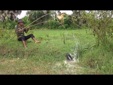 Catch Mud Fishing Trap In Cambodia- Catch Fish By Duck- Cast Net Fishing In Cambodia