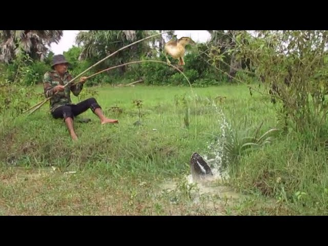 Catch mud Fishing trap in Cambodia- Catch Fish by Duck- Cast net fishing in Cambodia #1