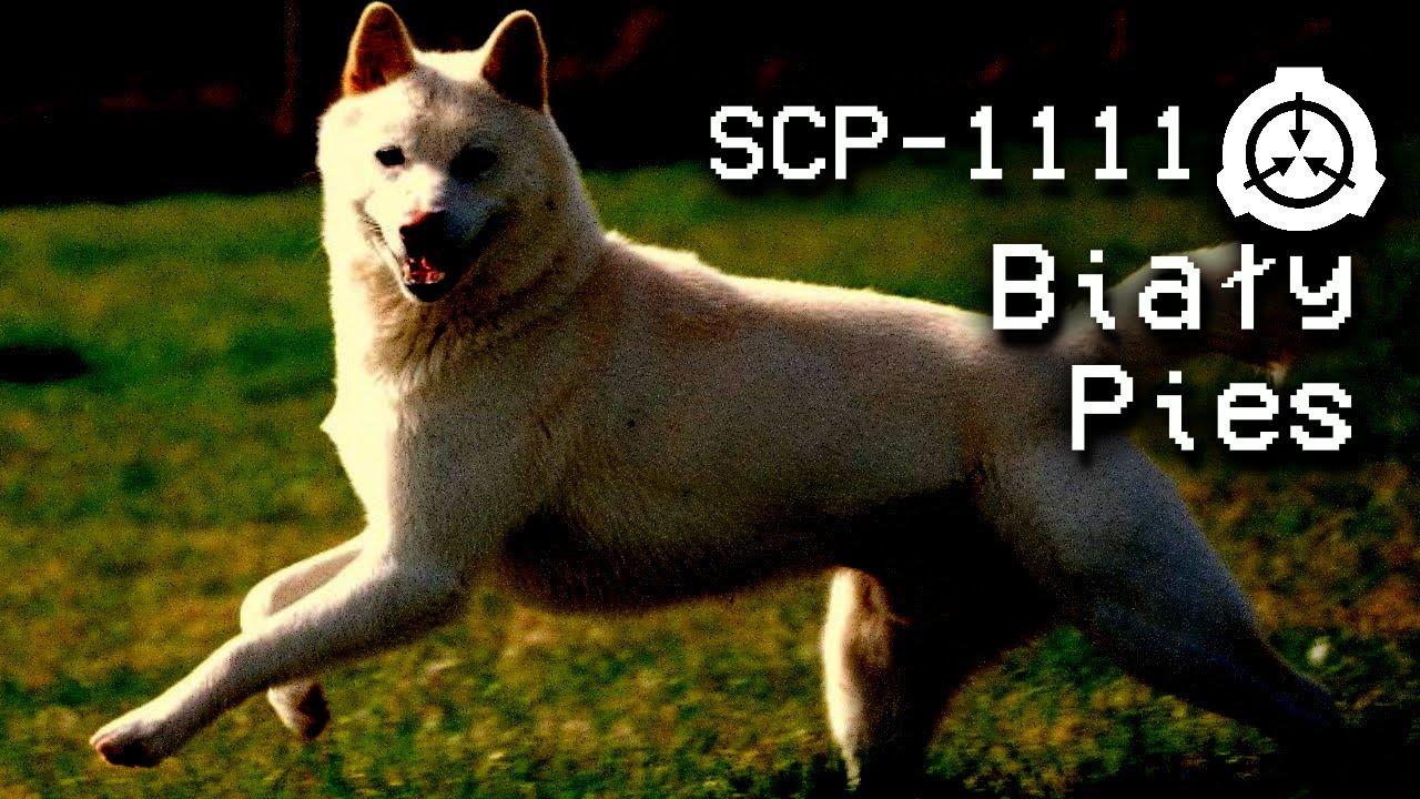 "SCP-1111 ""Biały Pies"" : Klasa Podmiotu - Euclid : Duchowy ..."
