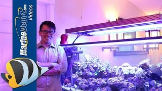 The Benefits of Using T5/LED Hybrid Lighting for Your Reef Tank