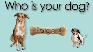 Folge 04 Der Welpe kommt! Was brauche ich, was braucht mein Hund? Erstausstattung für Welpen HAUL