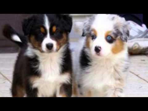 i 10 cani più belli del mondo - youtube
