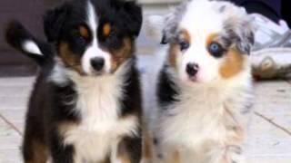 I 10 cani più belli del mondo