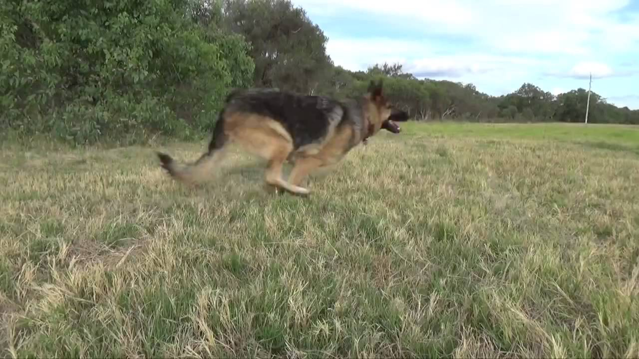 How To Tame A Wild Animal Like Craziest Dog Action Adventure Games