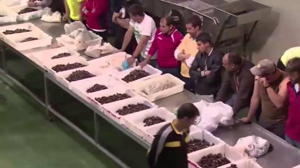 galicia cuisines et terroirs - youtube