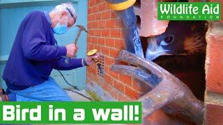 World's FASTEST BIRD gets stuck in a WALL!
