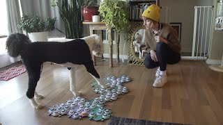 Learning to speak: A dog communicates with buttons