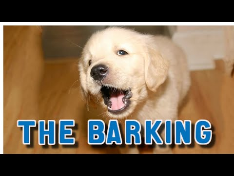 how-to-stop-puppy-from-barking-at-night