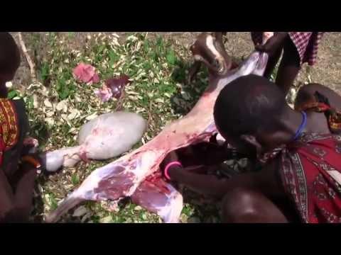 Maasai traditional slaughter (p1)