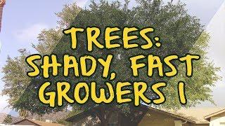 Trees: Shady, Fast Growers I