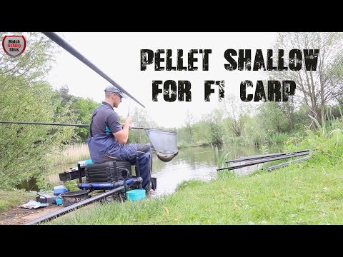 Pellet Shallow Fishing For F1s