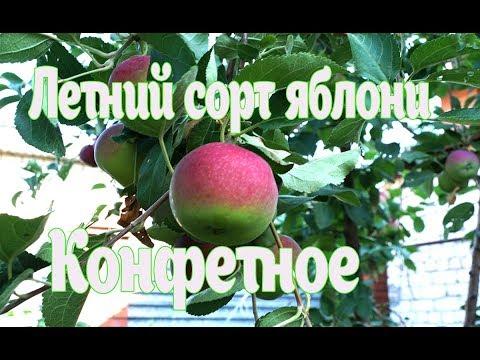 Лучший летний сорт яблони. Какой сорт яблони посадить.