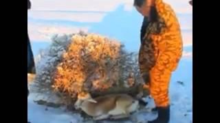 في روسيا بلغت درجة الحرارة 41تحت الصفر فكانت النتيجة .... شاهد النتيجة واااااو