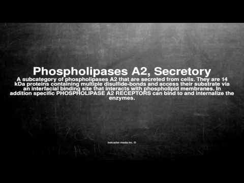 Medical vocabulary: What does Phospholipases A2, Secretory mean