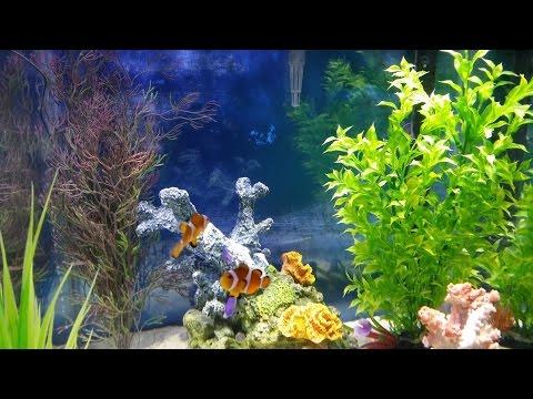 Salt Water Aquarium Basics