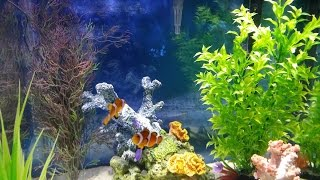 Salt Water Aquarium Basics