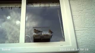 Window Bird Feeder - Leisure Meal