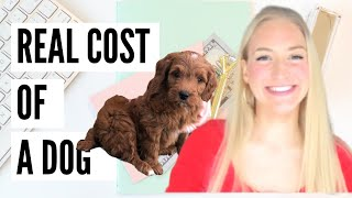 The REAL Cost of a Dog 2020 🐶 | Can I AFFORD a dog? | How Much MONEY does a Puppy Cost?