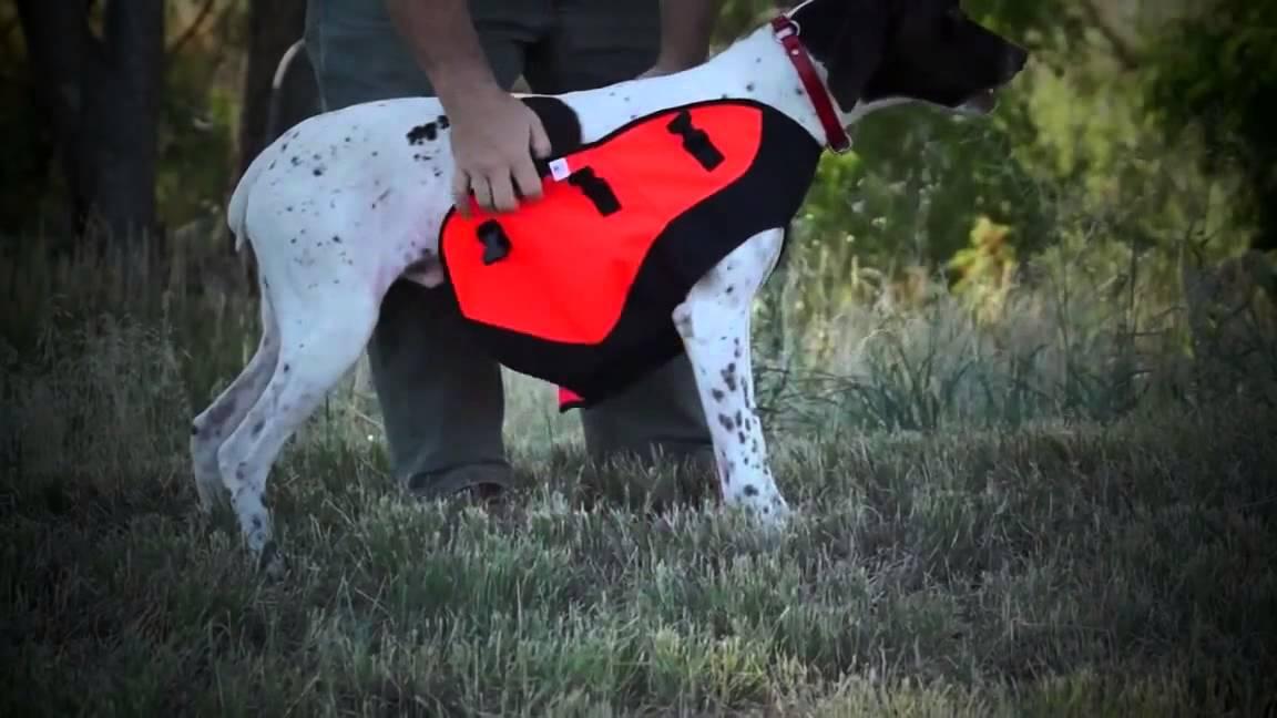 b8f779f1c60f2 Body Guard Dog Vest - YouTube