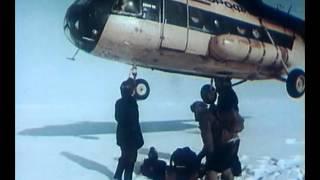 Гренландский тюлень.  В объективе животные 1983г.