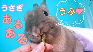 うさぎの優雅な朝食風景と飼いウサギあるある#65 thumbnail