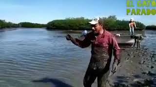 el-gato-parado-de-pesca-de-peces