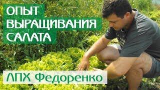 Опыт выращивания салата и базилика от Глобал Сидс в ЛПХ Федоренко (Краснодарский край)
