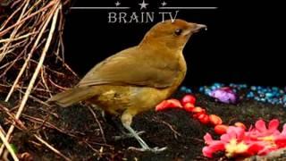 ТОП 5 самых необычных способов спаривания животных. 1 ЧАСТЬ. От BRAIN TV.