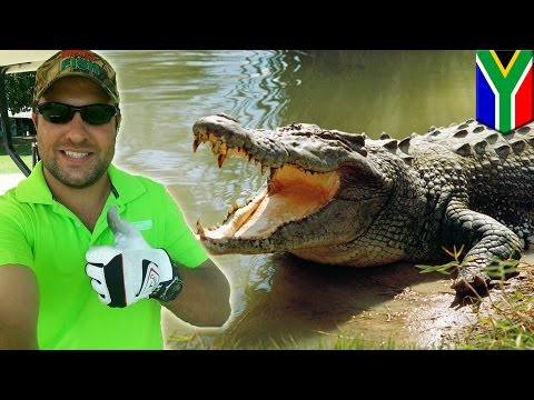 Crocodile attacks golfer hunting for golf balls in South Africa's Kruger National Park