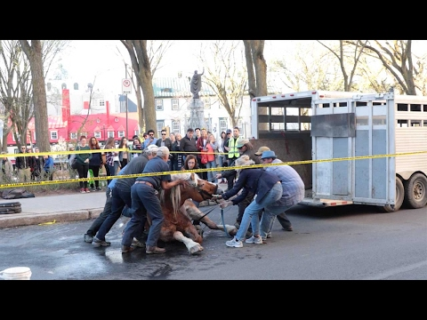 Carriage Horse Tries To Get Up