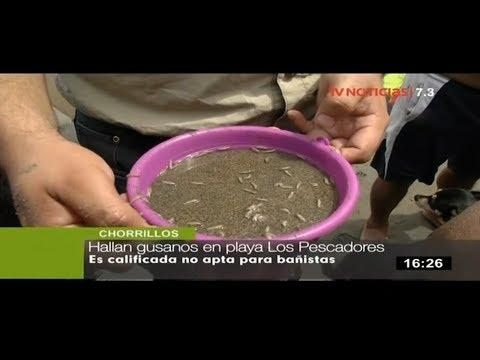 Hallan gusanos en playa Los Pescadores de Chorrillos