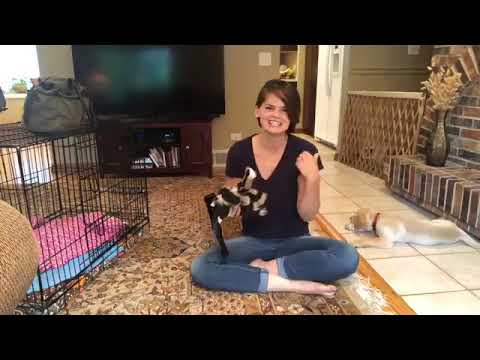 play-biting-and-crate-training-demo!