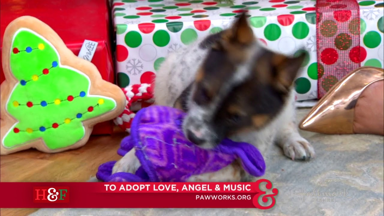 Love, Angel & Music Puppies in CA