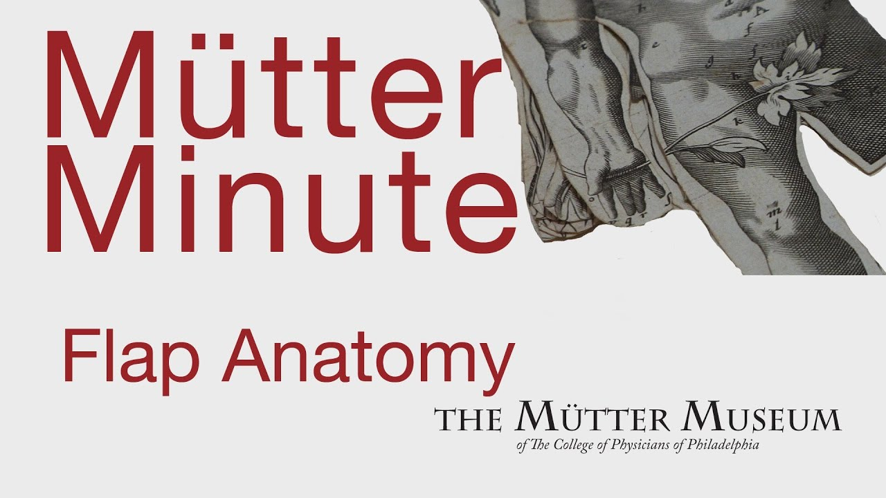 Mutter Minute Flap Anatomy - YouTube