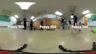 Puppies in 360