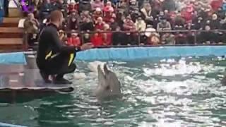 L_EGION - Игры дельфинов