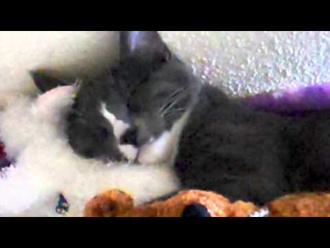 Kitty Cat Sleeps with Stuffed Animals