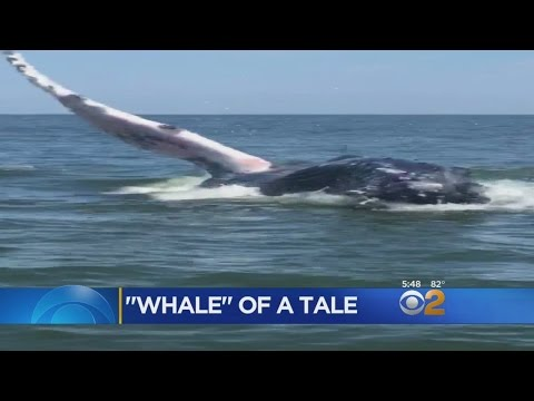 Whale Encounter In Manasquan