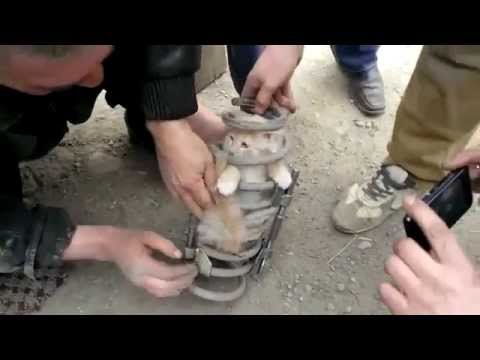 Кот проехал 100 километров в пружине амортизатора это нужно увидеть!!!!!