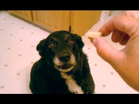 World's HARDEST Dog Tricks