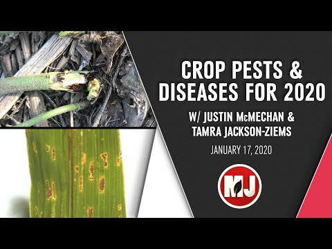 Crop Pests & Diseases for 2020 | Justin McMechan & Tamra Jackson-Ziems | January 17, 2020