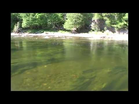 Fly Fishing Atlantic Salmon / Peche au Saumon Atlantique, Grand Cascapedia, Quebec