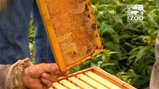 Pollinator Week Bee Hive Update - Cincinnati Zoo