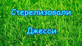 Стерелизовали нашу собаку, Джесси. (02.18г.) Семья Бровченко.